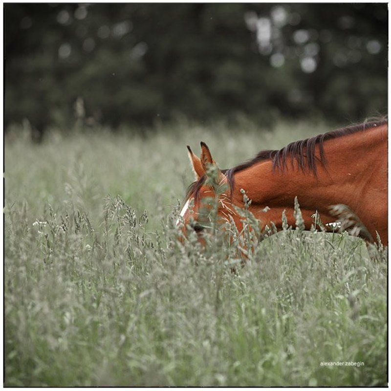 лошадь, лошади, конь, horses, horse, equi, zabegin ***photo preview