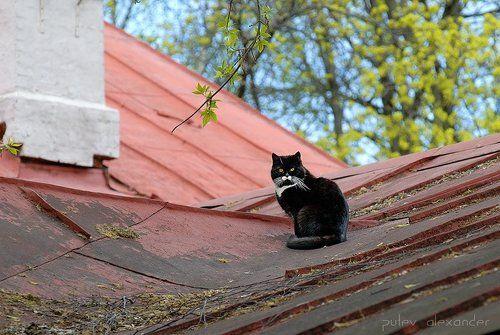 придумывать новые фото кота на крыше слабовидящих пассажиров