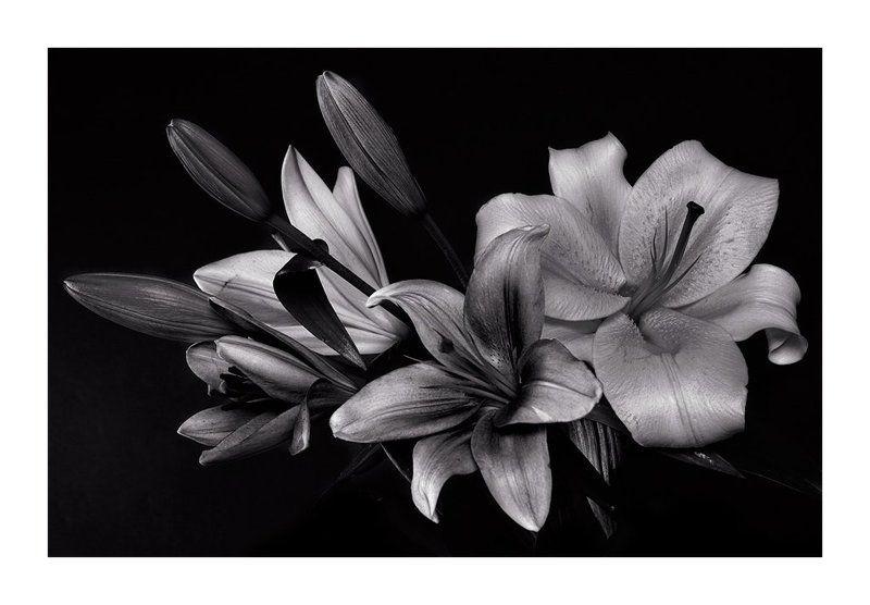 цветы, лилии ***photo preview