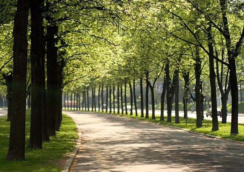 аллея, деревья, дорога photo preview