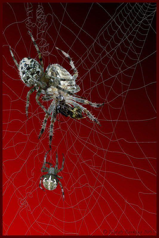 фотоарт,паук,пауки,коллаж C\'est la viephoto preview