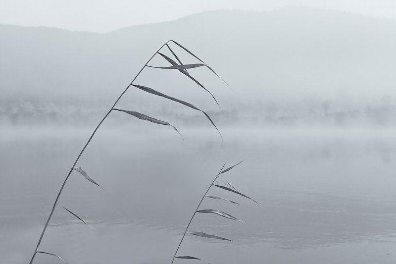 бурятия, река, баргузин, туман * * *photo preview