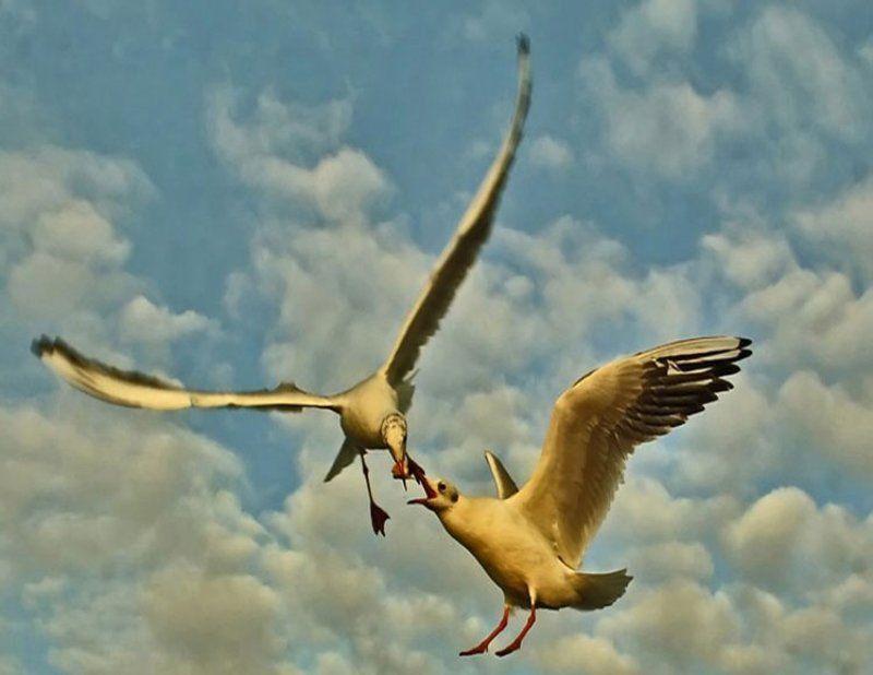 природа, птицы Хлеб войныphoto preview