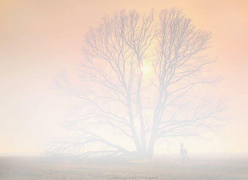 весна, задымленность, закат, олененок, пейзаж When you see soulphoto preview