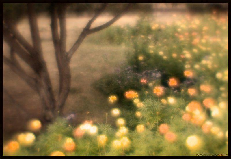 Цветные сныphoto preview