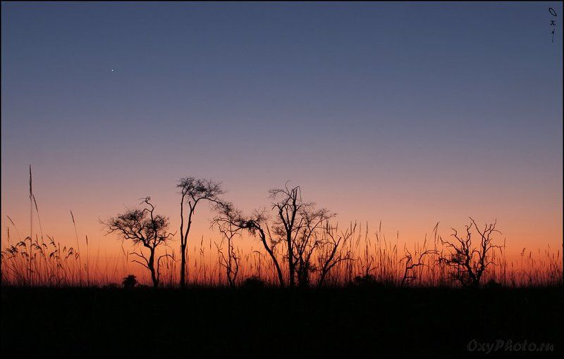 мореми, moremi, дельта окаванго, okavango delta, ботсвана, botswana, африка, africa Пробуждение...photo preview