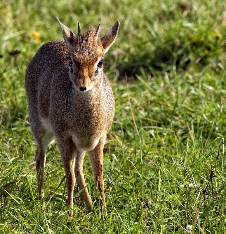 антилопа Я маленький,но смелый!photo preview