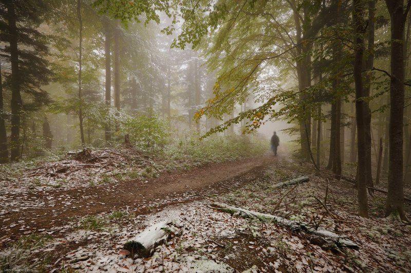 карпаты, грибы, октябрь В лесуphoto preview