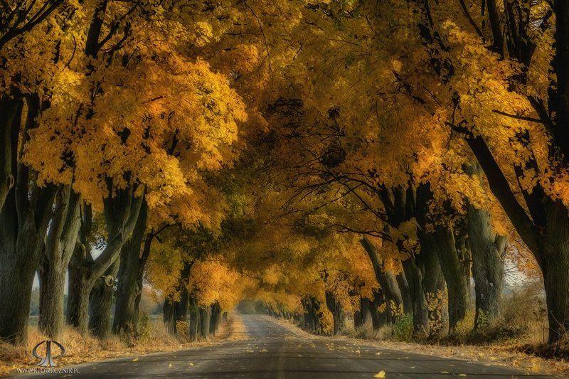 Autumn, Landscape, Leaves, Rpowroznik, Scenery, Trees autumn colors...photo preview