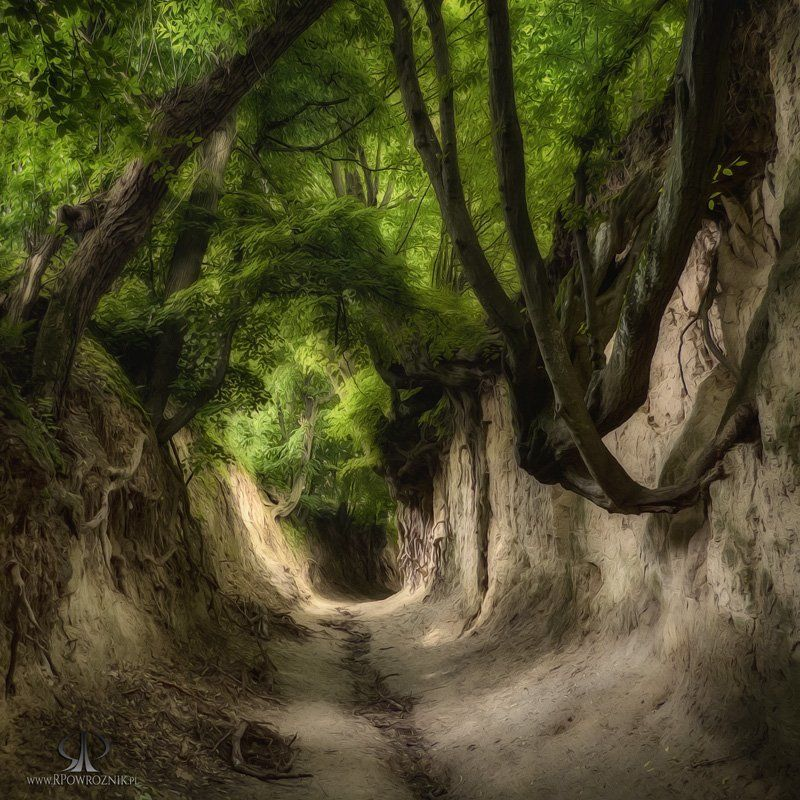 Gorge, Nature, Rpowroznik, Scenery, Trees wonders of nature...photo preview