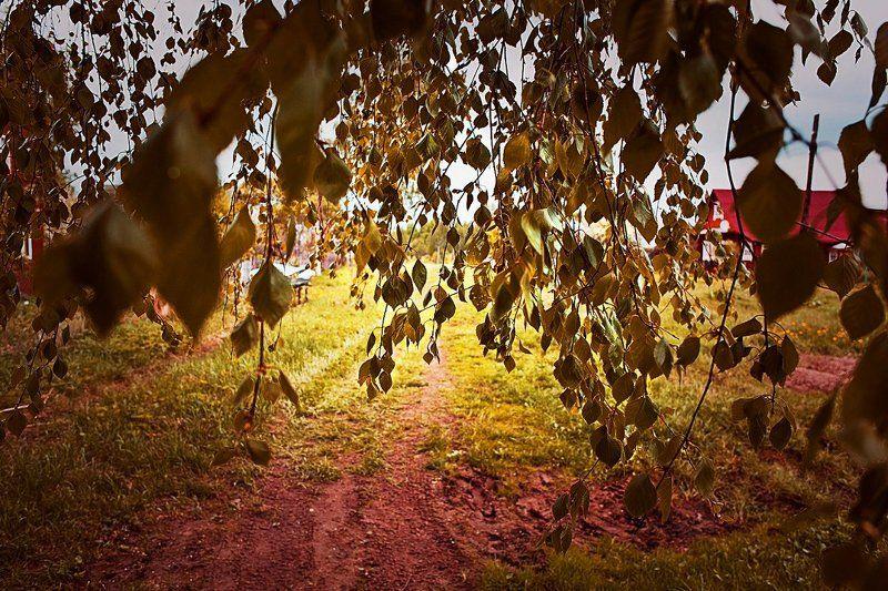 Береза, Осень междуphoto preview