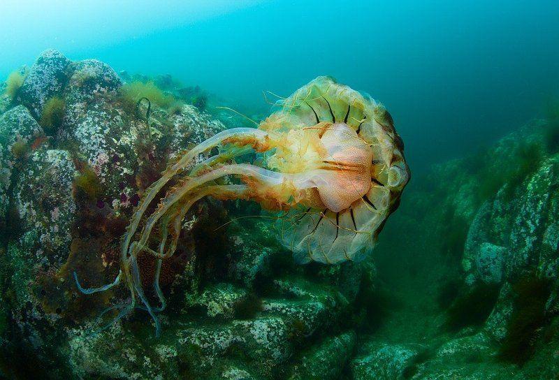 медуза, Россия, Курилы, Кунашир, Столбы Пролетая над каньономphoto preview