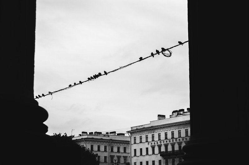 Город, Птицы, Санкт-петербург, Ч/б ***photo preview