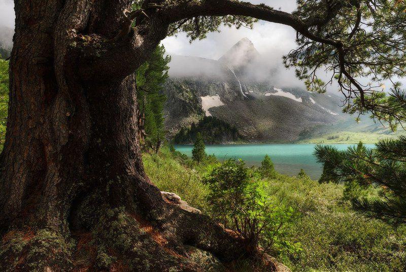 Горный Алтай Мультинские озёра М о.Крепкое. Озарённое солнцем.photo preview