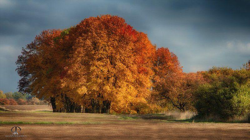 Autumn, Canon, Rpowroznik, Scenery, Trees autumn colors...photo preview
