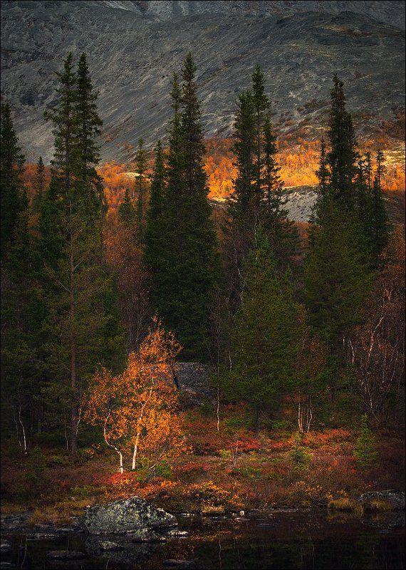Хибины, осень, горы Акварель осени.photo preview