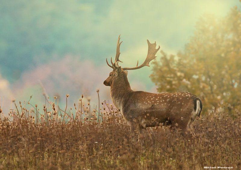 Wildlife Kingphoto preview