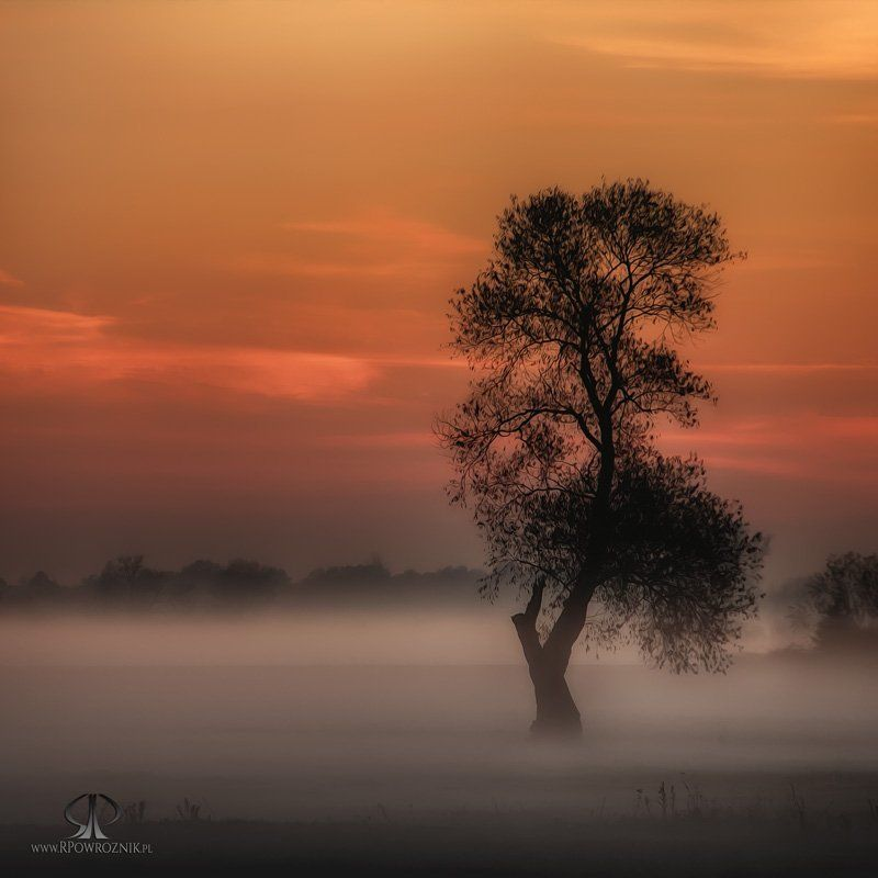 Fog, Landscape, Rpowroznik, Sunset, Tree lonely...photo preview