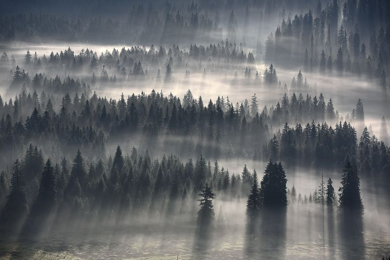 Лес, Лес туман Туманные рекиphoto preview