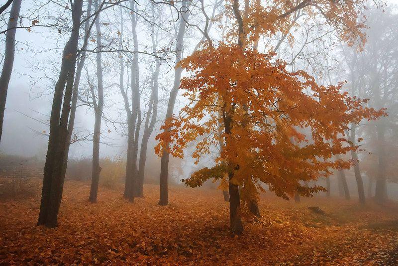Глядя на осеньphoto preview