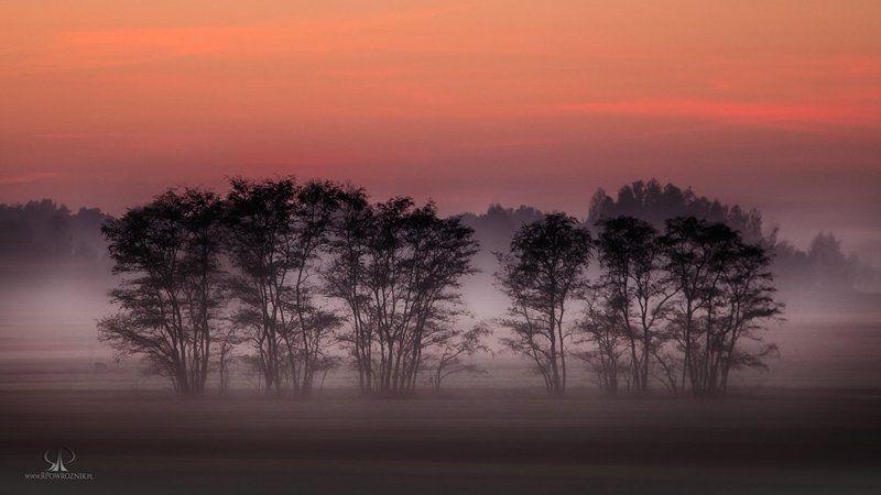 Fog, Landscape, Rpowroznik, Scenery, Trees a foggy evening...photo preview