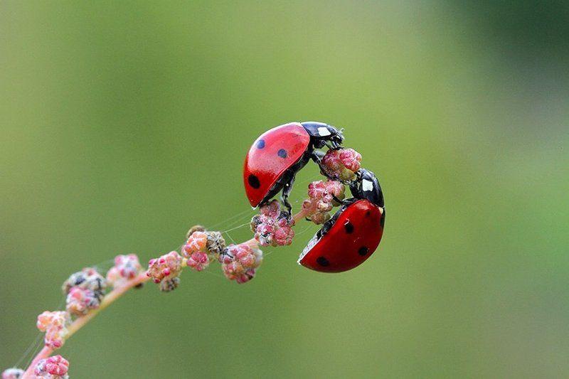 macro ladybug nature  lovephoto preview