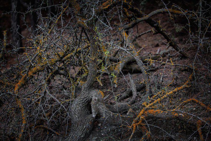 деревья, горы, сучки, корень, листья, колючки Миниатюры в цветеphoto preview