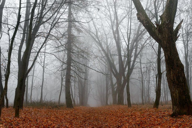 Осень, Парк, Реадовка, Смоленск, Туман А ведь скоро будет так...photo preview