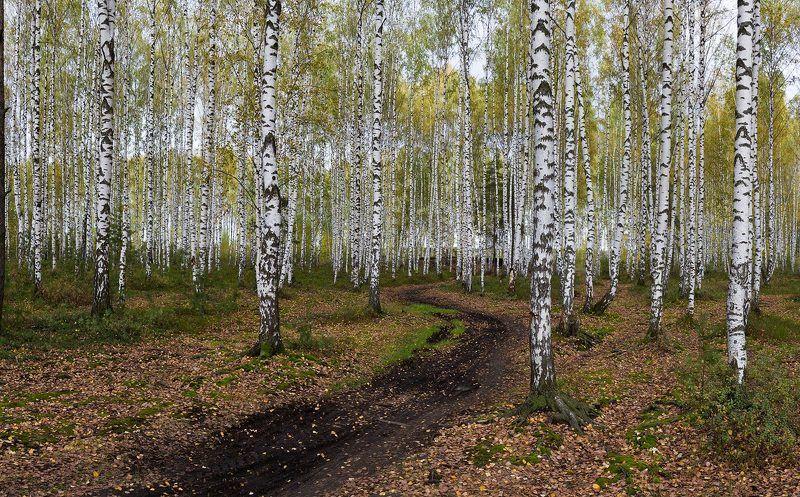 Bijan Saha, Russia
