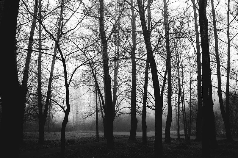 Дерево, Туман, Фото, Фотография, Ч/б, Черно-белое фото, Чёрный ***photo preview