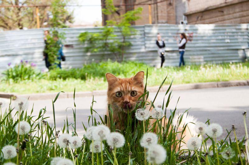 Андрей, Ukraine