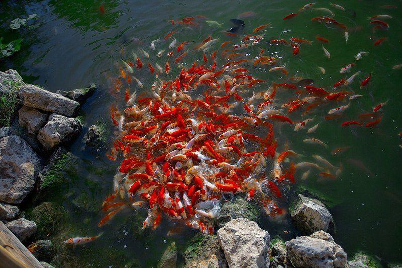 рыбки, озеро Голод не тетка...photo preview
