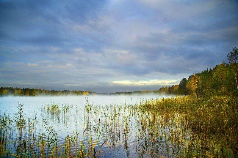 туман,облака,вода,осока,лес,природа Туманное утроphoto preview