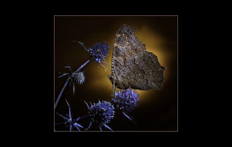Ночная бабочкаphoto preview