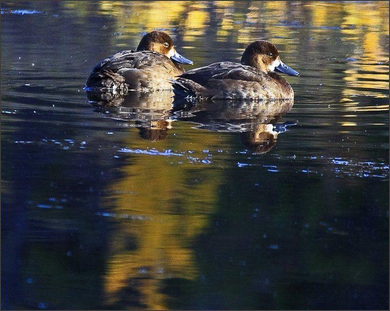 Осень в пруду.photo preview