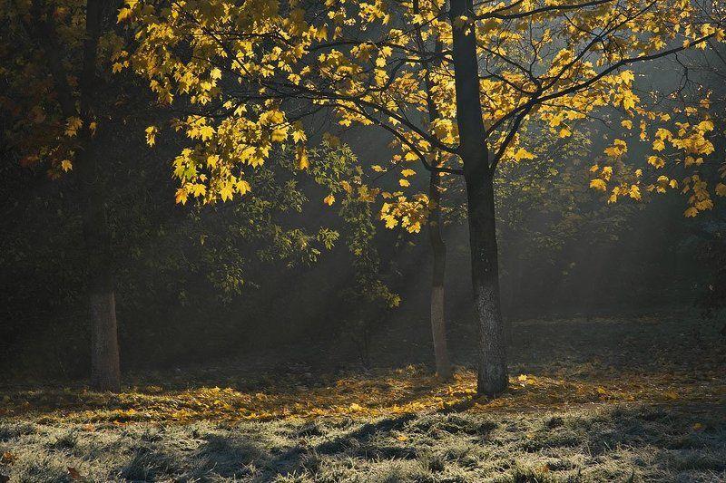 утро, город, туман Утромphoto preview