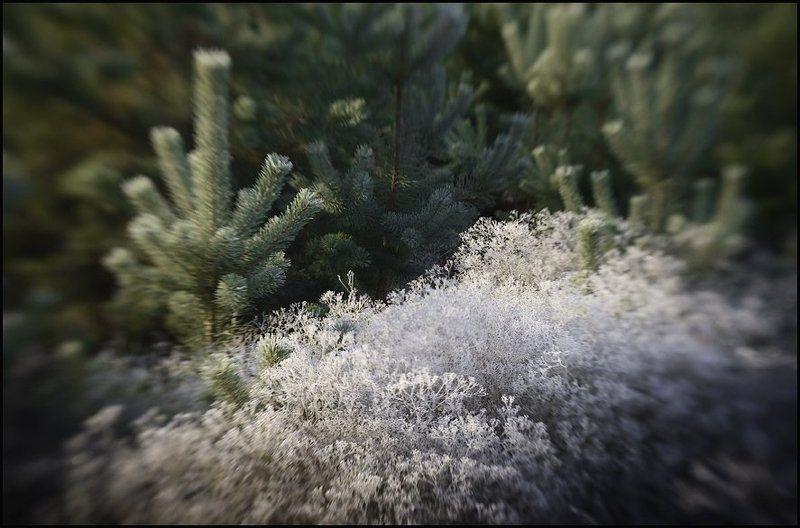 иней, перекати-поле, lensbaby Первые заморозкиphoto preview