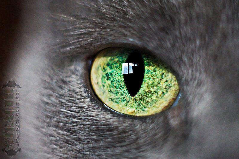 животные, кошка, портрет KatzEyephoto preview