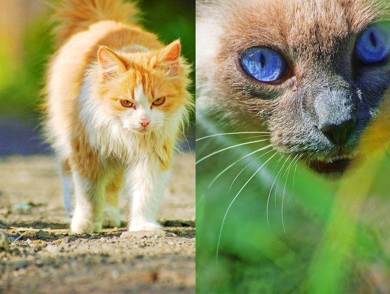 cats Нарушение территорииphoto preview