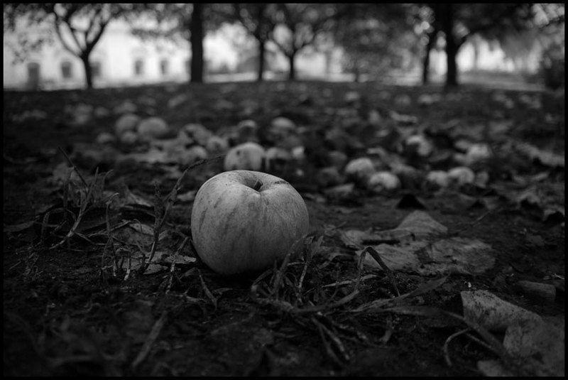 Яблокиphoto preview
