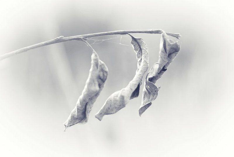 чб, листья, природа Минимализмphoto preview