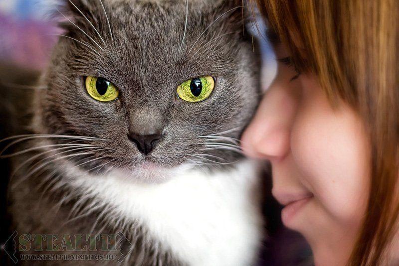Мои котятаphoto preview
