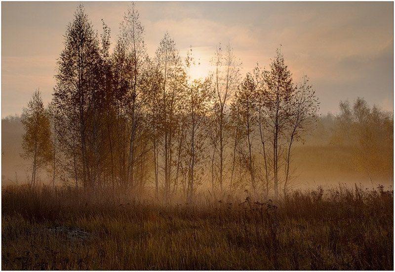 осень, туман, березки, утро Осеннее утроphoto preview