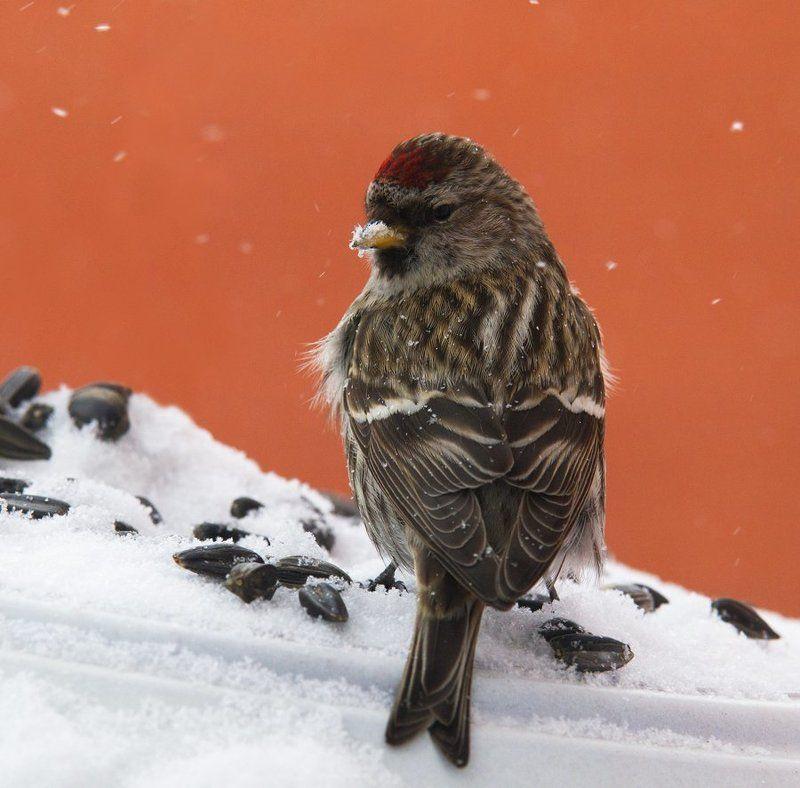 Птицы на самом юге \