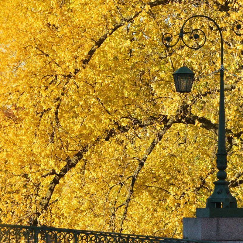 Осенний фонарьphoto preview