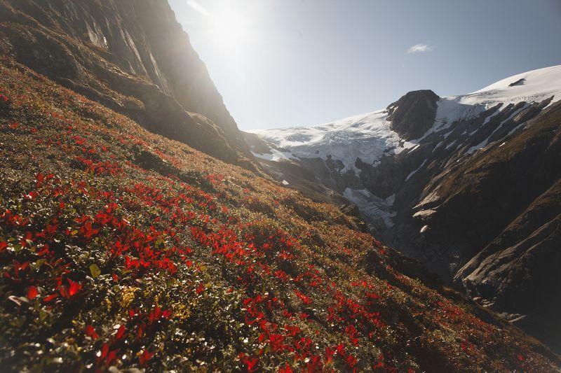 горы, норвегия, цветы, пейзаж, вершина, скандинавия Склон горы Kattanaken , Норвегияphoto preview