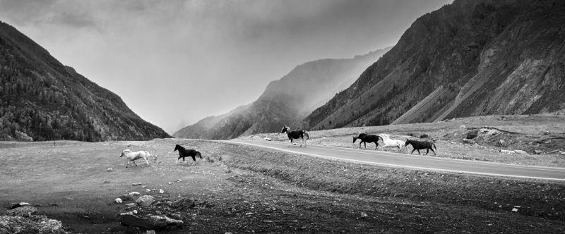 Алтайские мустангиphoto preview