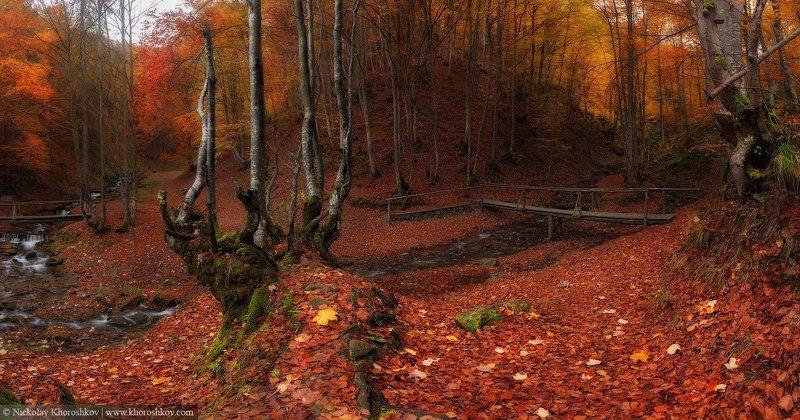 Карпаты, Лес, Осень, Украина В чаще леса...photo preview