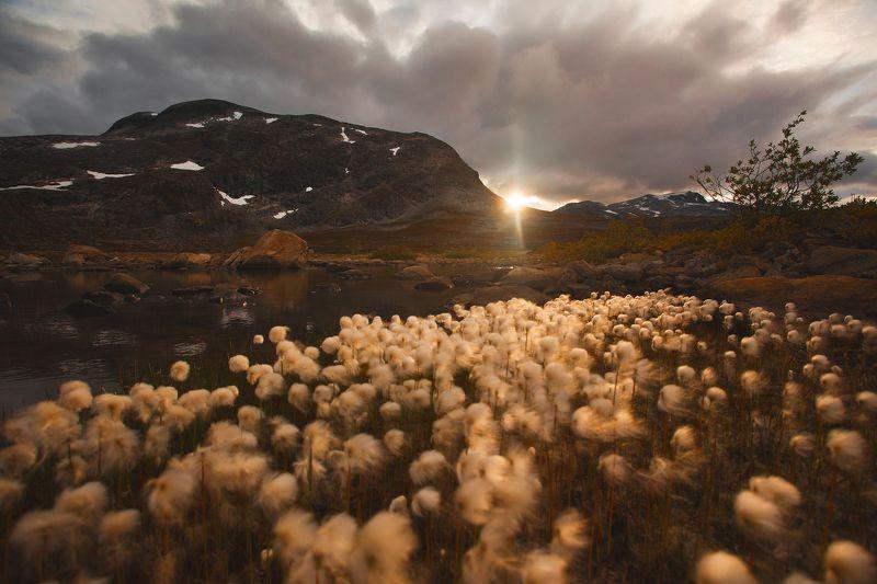 норвегия, озера, закат, скандинавия, цветы, сумерки, пейзаж Окрестности Sandgrovbotn на закате. Норвегия.photo preview