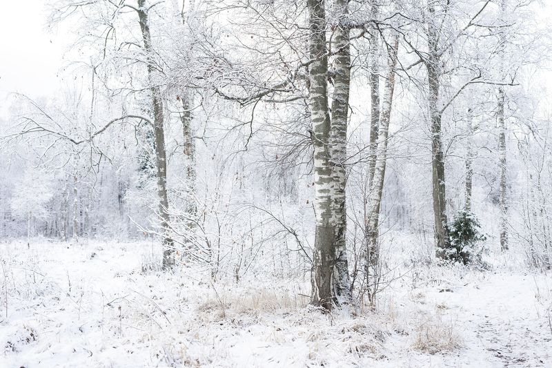 Forest, Landscape, Nature, Snow, Winter Winter Forestphoto preview